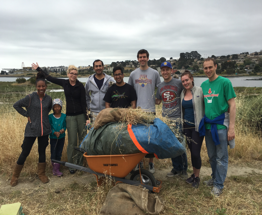 AV&Co. clears out the non-indigenous plants along San Francisco Bay at Heron's Head Park